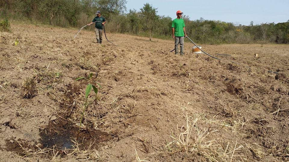 universidade da floresta consultoria ambiental restauração ecológica reflorestamento plantio mudas nativas cursos treinamentos