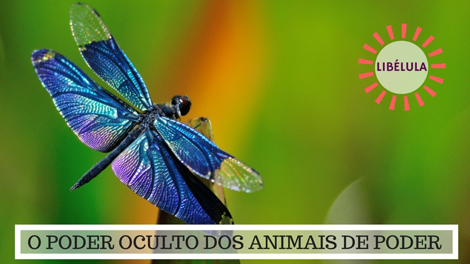 Significado da Libélula - O Poder Oculto do Animal de Poder