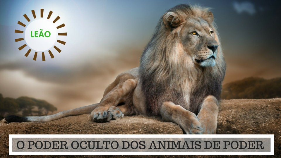 Significado do Leão - O Poder Oculto do Animal de Poder!