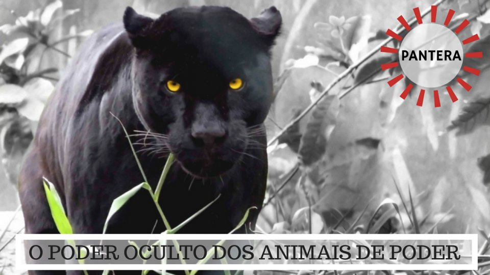 Significado da Pantera - O Poder Oculto do Animal de Poder!