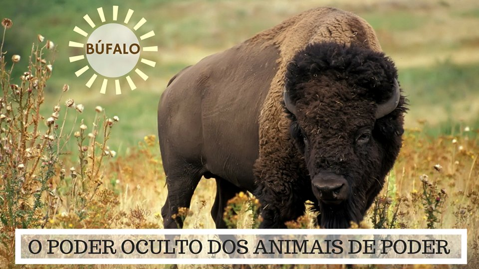 O Poder Oculto do Animal de Poder - Significado do Búfalo