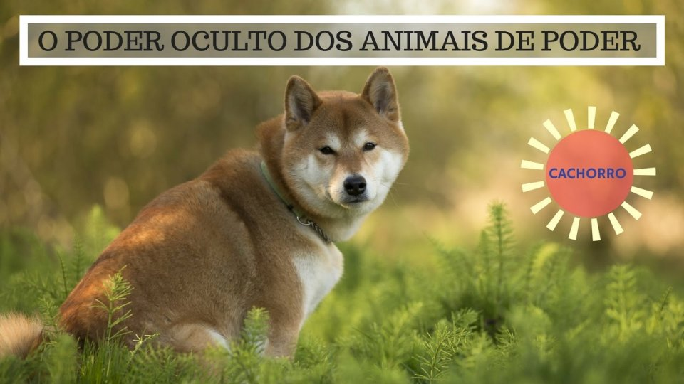 Significado do Cachorro - O Poder Oculto do Animal de Poder!