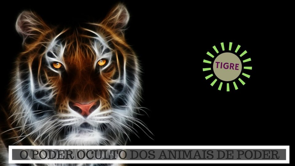 Significado do Tigre - O Poder Oculto do Animal de Poder!