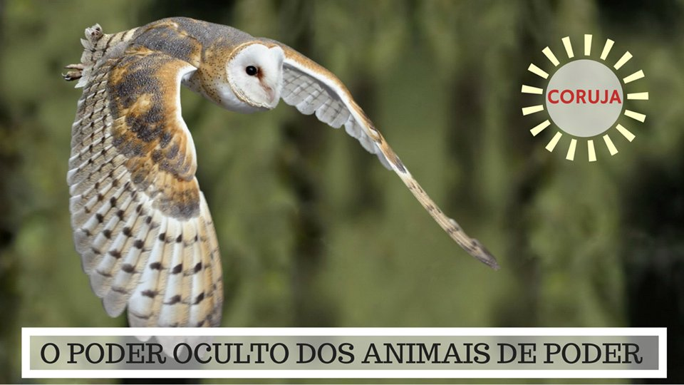 Significado da Coruja - O Poder Oculto do Animal de Poder!