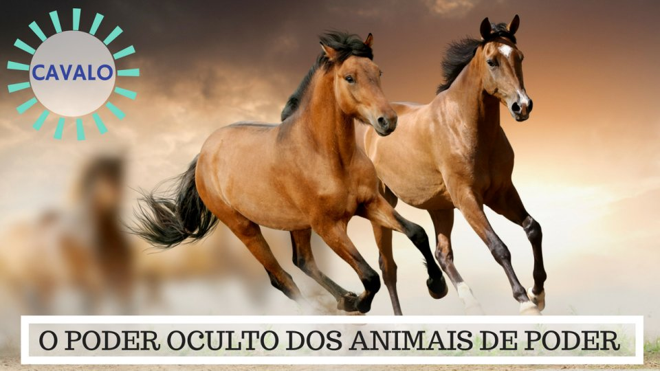 Significado do Cavalo - O Poder Oculto do Animal de Poder!