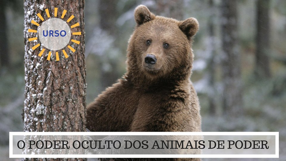 O Poder Oculto do Animal de Poder - Significado Urso