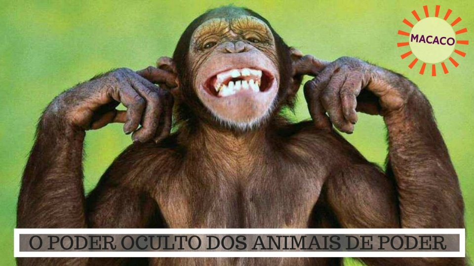 Significado do Macaco - O Poder Oculto do Animal de Poder!